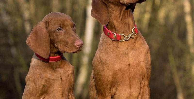 Affordable Pet Health Insurance – Glastonbury CT